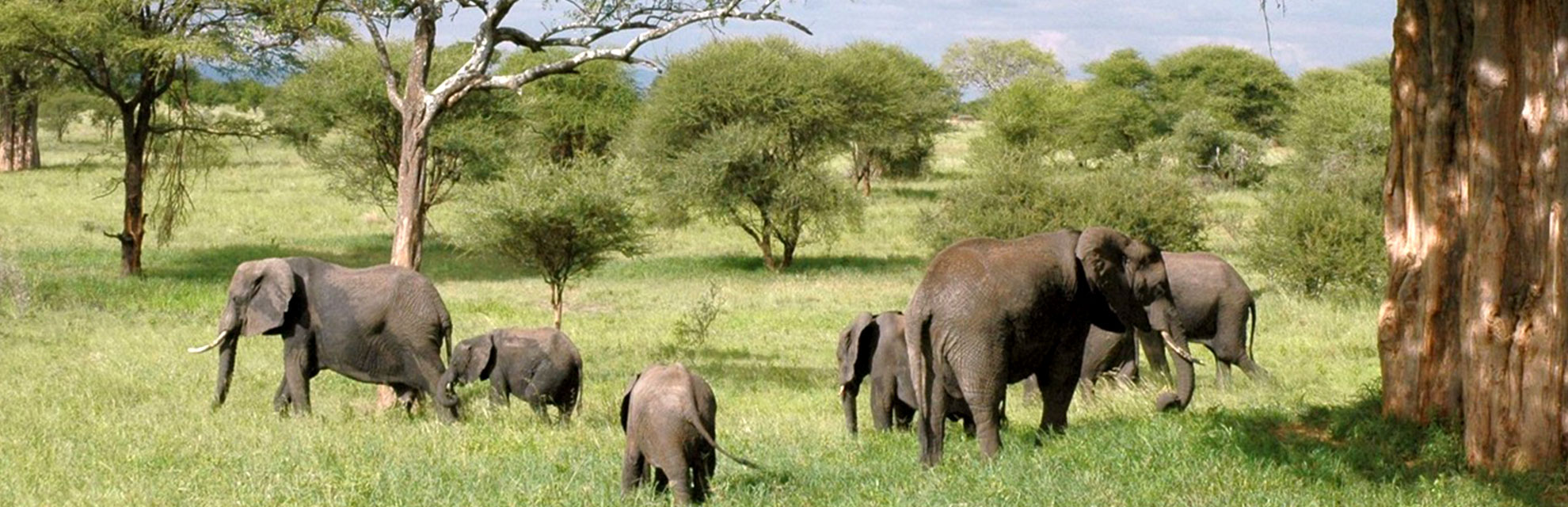 elephants on our kruger safari collection