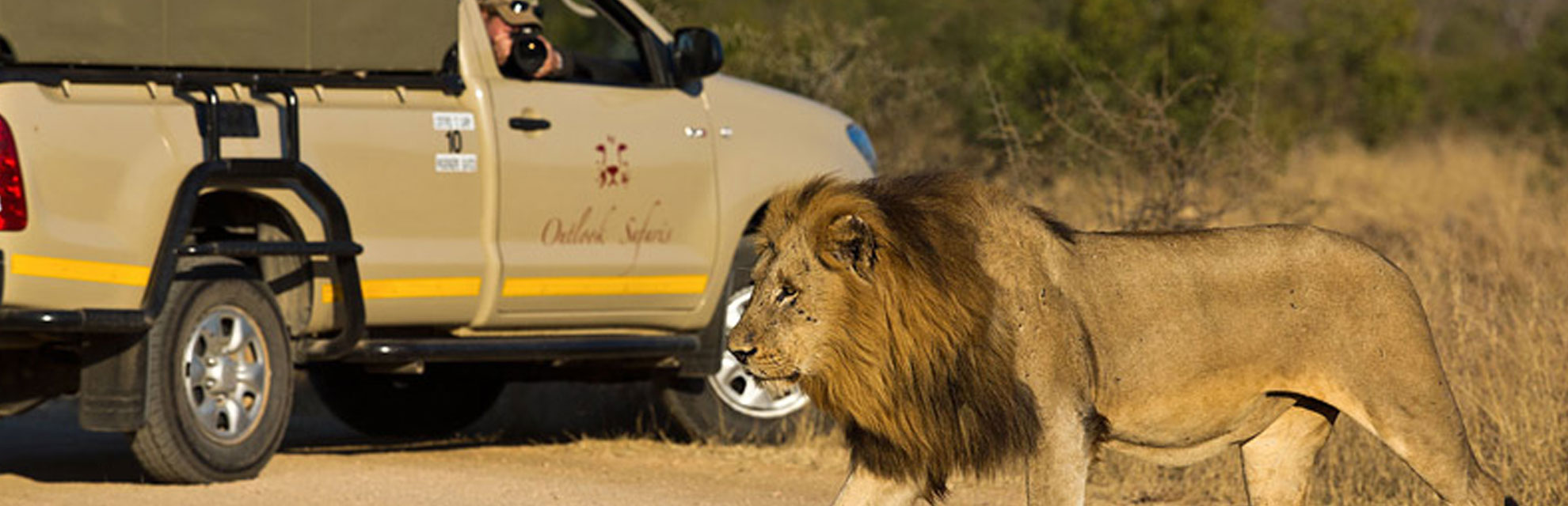 kruger safari collection lion and open safari vehicle