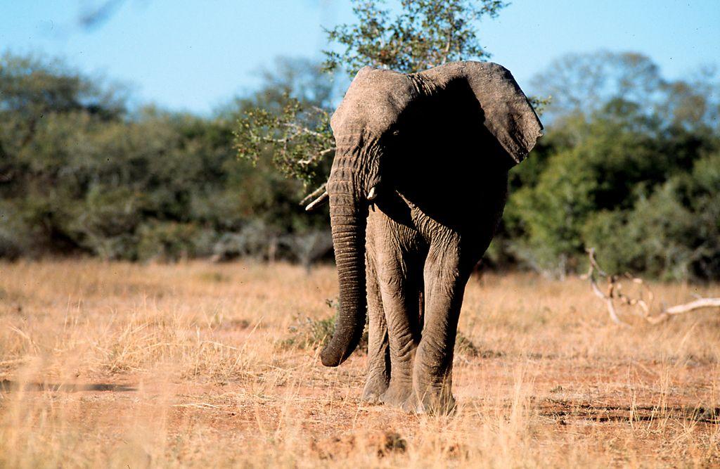 7 Day Kruger, Swaziland & Zululand Safari