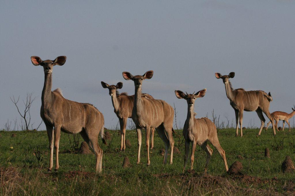 8 Day Kruger, Swaziland & KZN Safari