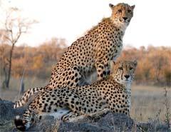 johannesburg-safaris
