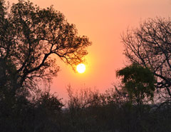 kruger-safaris