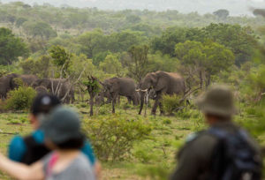 3 day classic Kruger Safari elephants walking