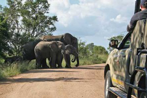 day-safaris-full-day-private-game-drive
