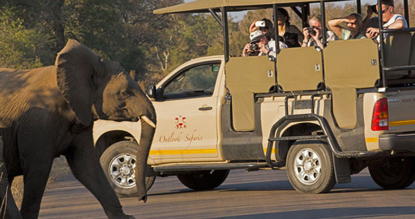 Affordable Safaris