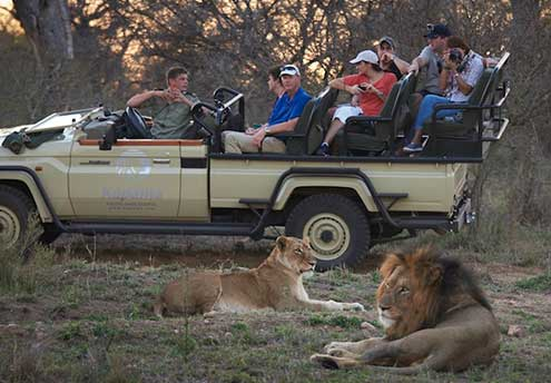 private luxury game lodge kapama southern camp lions on a game drive