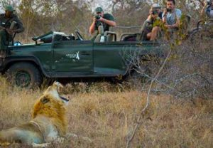 luxury private reserve lion