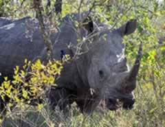 7day-kwazulu-natal-safaris