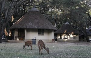 kruger budget accomodation