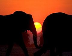 kruger-park-safari_01