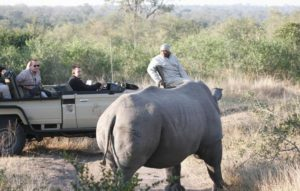 private luxury game lodge on a kruger safari rhino charge