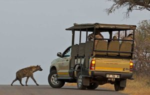4 day classic kruger safari open safari vehicle and hyena