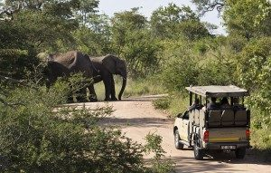 budget kruger safari elephants on a morning game drive