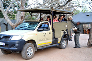 camping kruger safari on a morning game drive