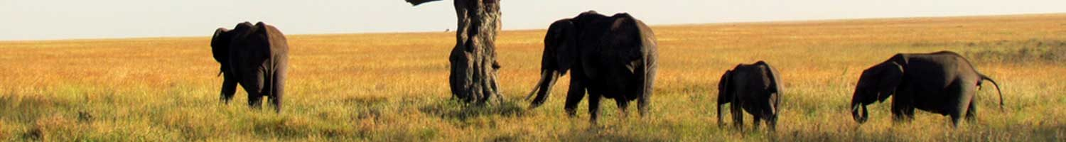 classic, budget and camping best value kruger safari elephant family