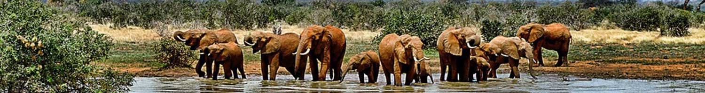luxury private game lodges inside kruger park elephants enjoying a bath