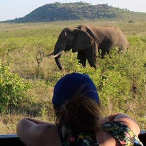 kruger-safari-elephant-view