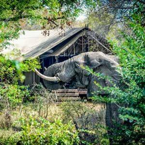 kruger-safari-private-game-reserve-manyaleti-elephant