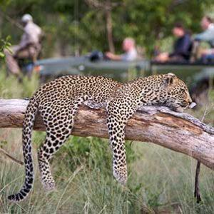 kruger-safari-private-lodge-leopard-tree-sighting