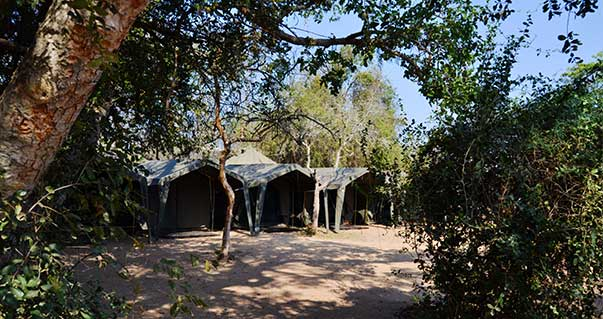 kruger-camping-safari-campsite-tents-blog