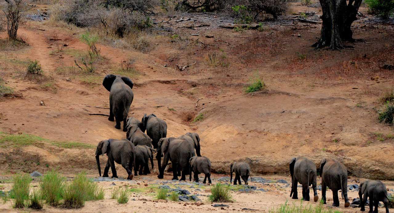 elephants-kruger-camping-safari-blog