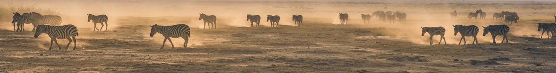 4-day-budget-header-zebra-herd