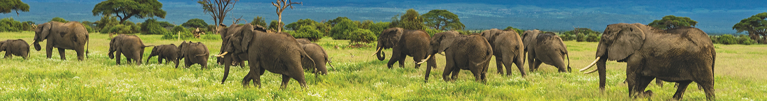 4-day-camping-header-elephant-herd