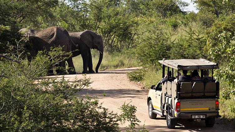 4-day-camping-kruger-safari-vehicles-elephants-guests
