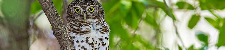kruger-wildlife-owl-blog