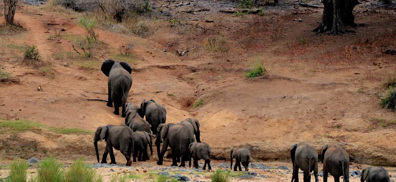 kruger-wildlife-safaris-elephant-herd-camping-blog