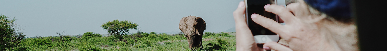 kruger-wildlife-safaris-enquire-now
