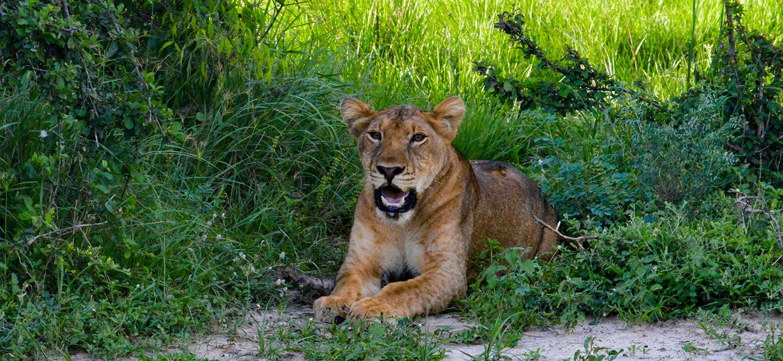 kruger-wildlife-safaris-ultimate-kruger-safari-blog
