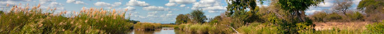 kruger-wildlife-scenery-blog
