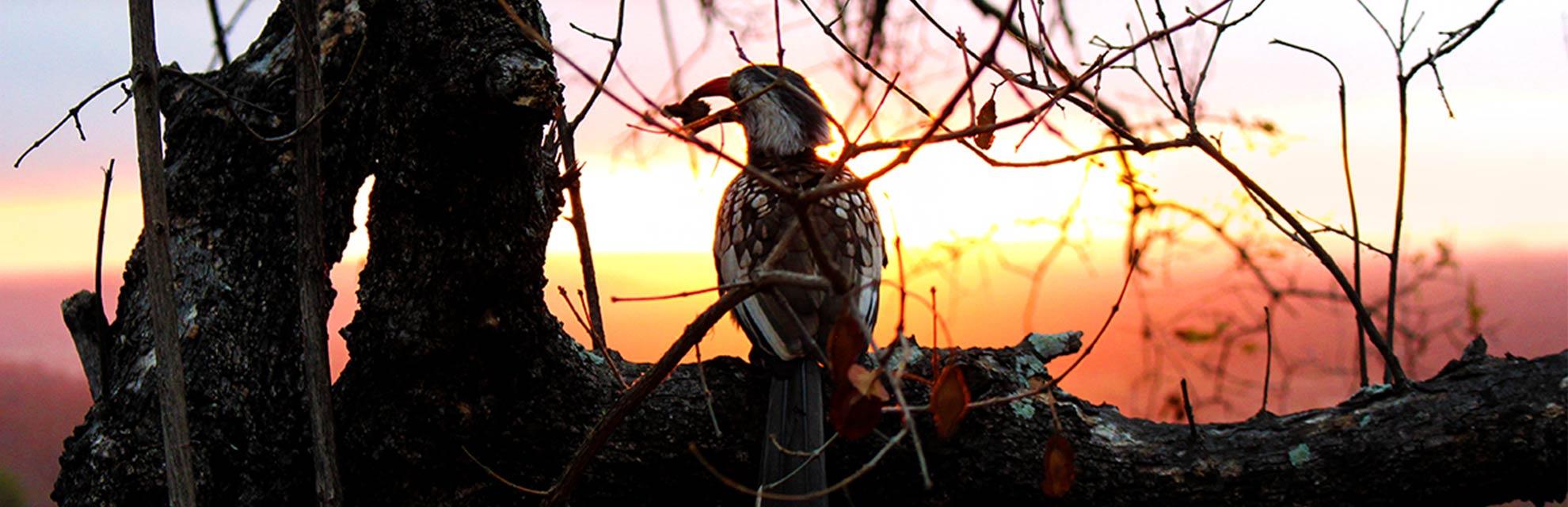 kruger wildlife safaris sunset